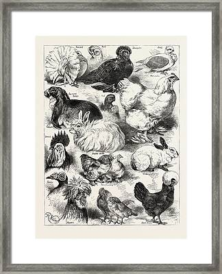 The Poultry, Pigeon, And Rabbit Show At The Crystal Palace Framed Print by Angolan School