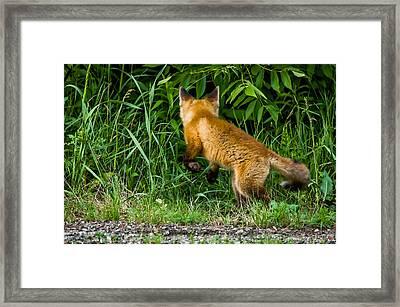 The Pounce Framed Print by Steve Harrington