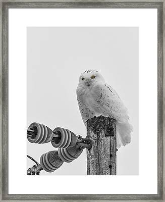 The Power Of The Owl Black And White Framed Print by Thomas Young