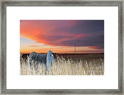 Framed Print featuring the photograph The Prairie by Minnie Lippiatt