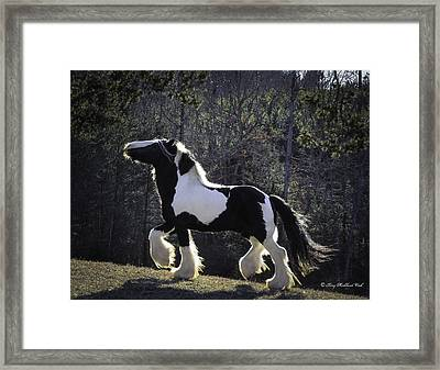 The Prancing Stallion Framed Print