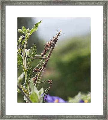 The Praying From South Of France Framed Print by Terry Cosgrave