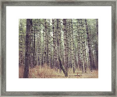 Framed Print featuring the photograph The Preaching Of The Pines by Kerri Farley
