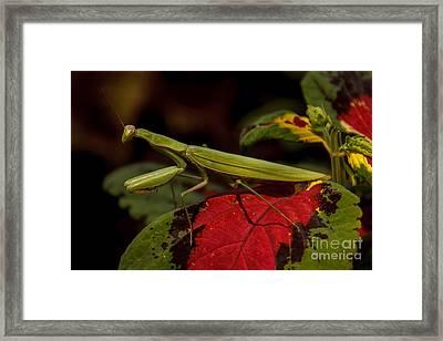 The Predator Framed Print by Robert Bales