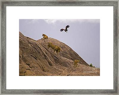 Framed Print featuring the photograph The Pride by J L Woody Wooden