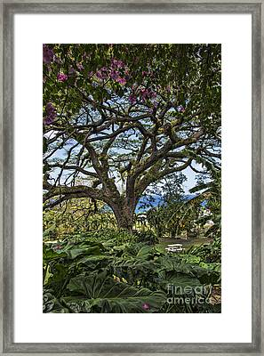 The Pride Of St. Kitts Framed Print