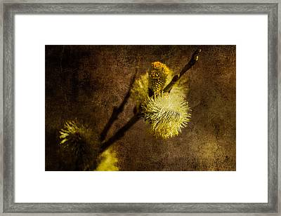 The Prime Of The Year Framed Print by Alexander Senin