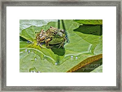 Framed Print featuring the photograph The Prince In Waiting by JRP Photography