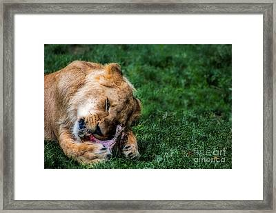 The Prince Is Hungry Framed Print by Hannes Cmarits