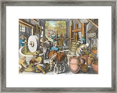 The Production Of Olive Oil, Plate 13 Framed Print