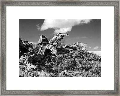 The Prophet Framed Print by Jim Garrison