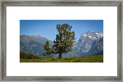 The Proud Tree Framed Print by Stefan Hoareau