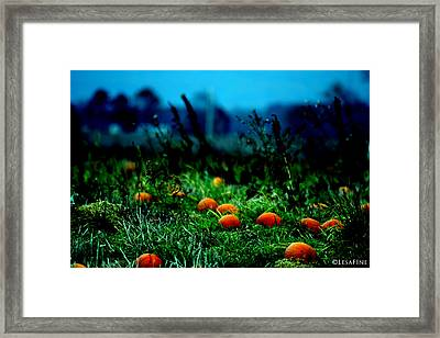 Framed Print featuring the photograph The Pumpkin Patch by Lesa Fine