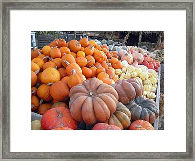 The Pumpkin Stand Framed Print by Richard Reeve