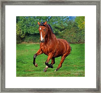 The Pure Power Framed Print by Angel  Tarantella