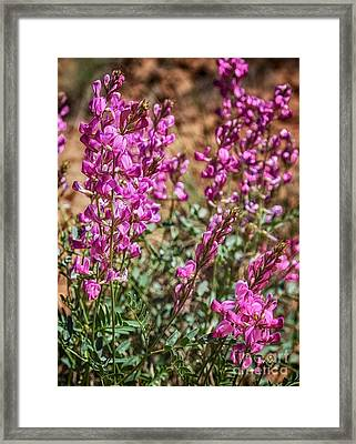 The Purple Flowers In The Desert Hdr Framed Print by Mitch Johanson