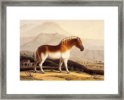 The Quahkah Framed Print by Samuel Daniell