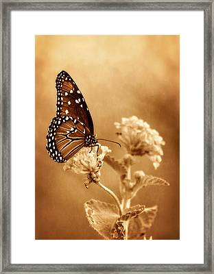 The Queen Butterfly  Framed Print