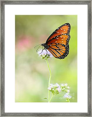 The Queen In Spring Framed Print by Sabrina L Ryan