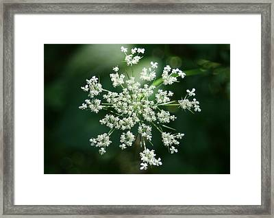 The Queen Of Lace Framed Print by Barbara S Nickerson