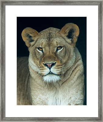 The Queen Framed Print by Phil Abrams
