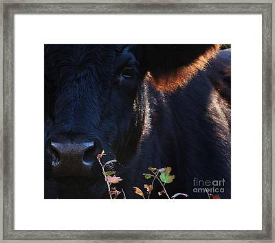 The Quiet One Framed Print