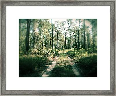 The Quiet Walk Framed Print by Chasity Johnson