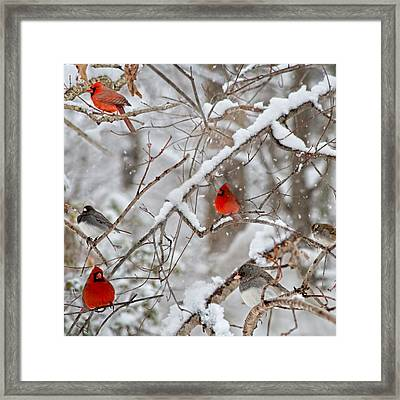 The Quiet Within The Forest Framed Print by Betsy Knapp