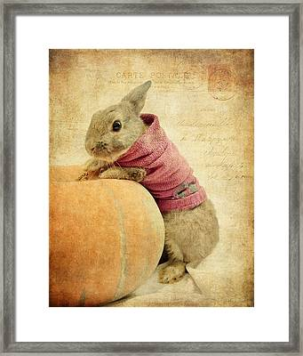 The Rabbit And The Pumpkin Framed Print
