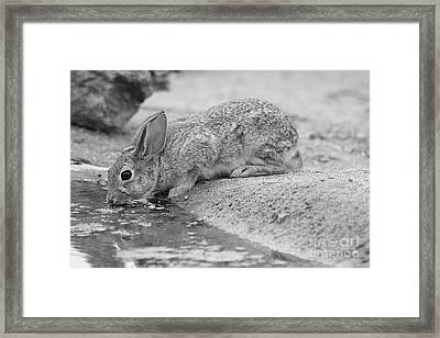 The Rabbit And The Water Framed Print