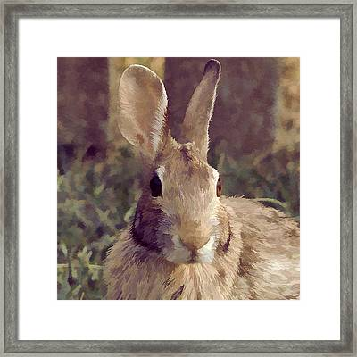 The Rabbit Framed Print