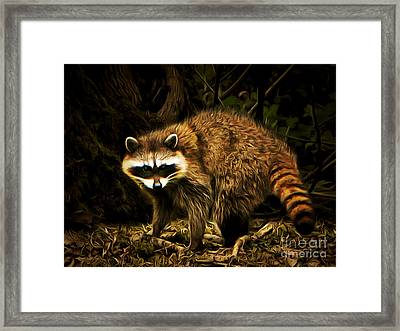 The Raccoon 20150211brun Framed Print by Wingsdomain Art and Photography