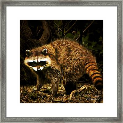 The Raccoon 20150215brun Square Framed Print by Wingsdomain Art and Photography