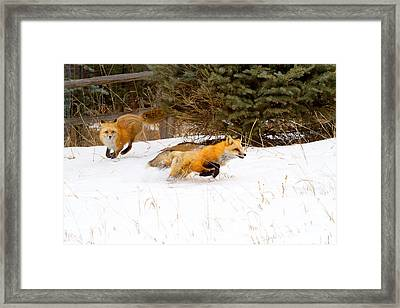 The Race Is On Framed Print by Jim Garrison