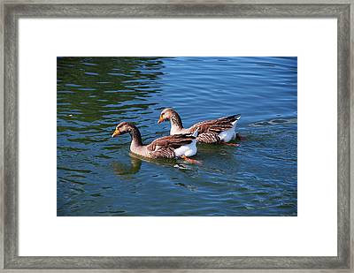 The Race Is On Framed Print by Linda Segerson