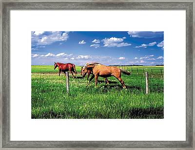 The Race Framed Print by Terry Reynoldson
