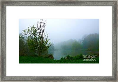 The Raggedy Tree Framed Print by Andrew Middleton