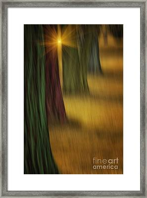 The Rainbow Forest Framed Print by Tom York Images