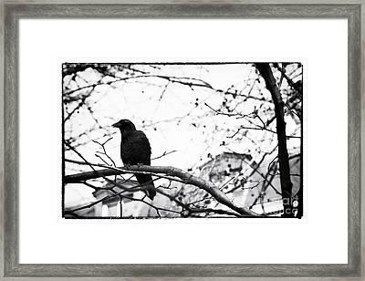 The Raven Framed Print by John Rizzuto