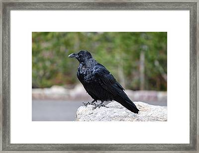 Framed Print featuring the photograph The Raven by Lars Lentz
