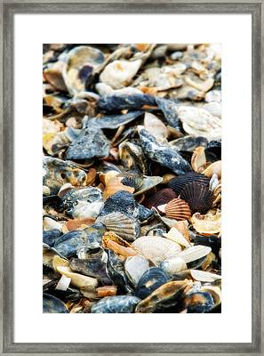 Framed Print featuring the photograph The Raw Bar by Joan Davis