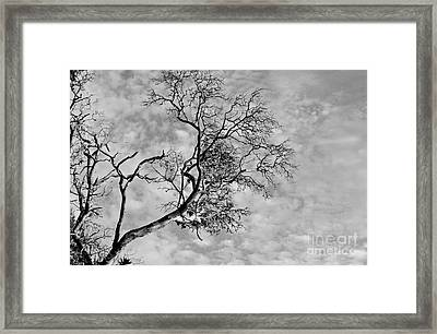 The Reach Framed Print