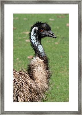 The Real Big Bird Framed Print by Linda Phelps