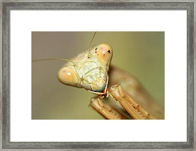 The Real Predator  Framed Print by Shoal Hollingsworth