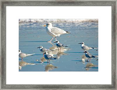 The Real Snowbirds Framed Print by Rich Leighton