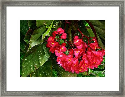 Realm Of The Green Dragon Framed Print
