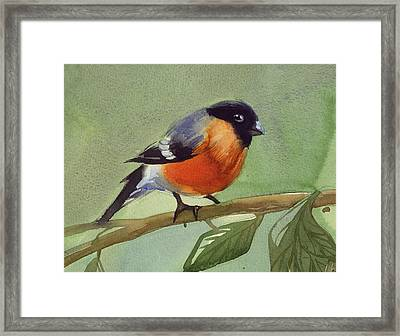 The Red Birdie Framed Print by Tatiana Zubareva