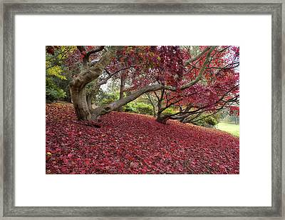 The Red Carpet Framed Print