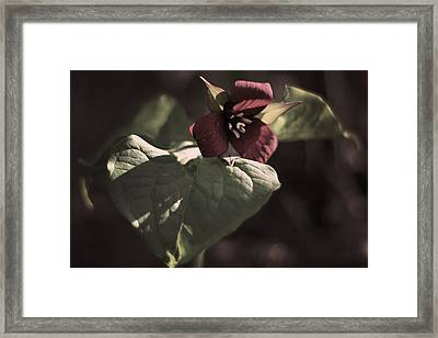 The Red Goddess  Framed Print by Alex Wrenn