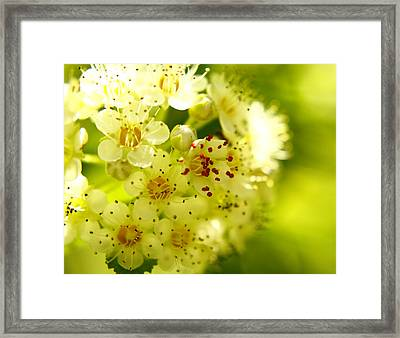 The Red In The Middle Framed Print by Alexandra  Rampolla